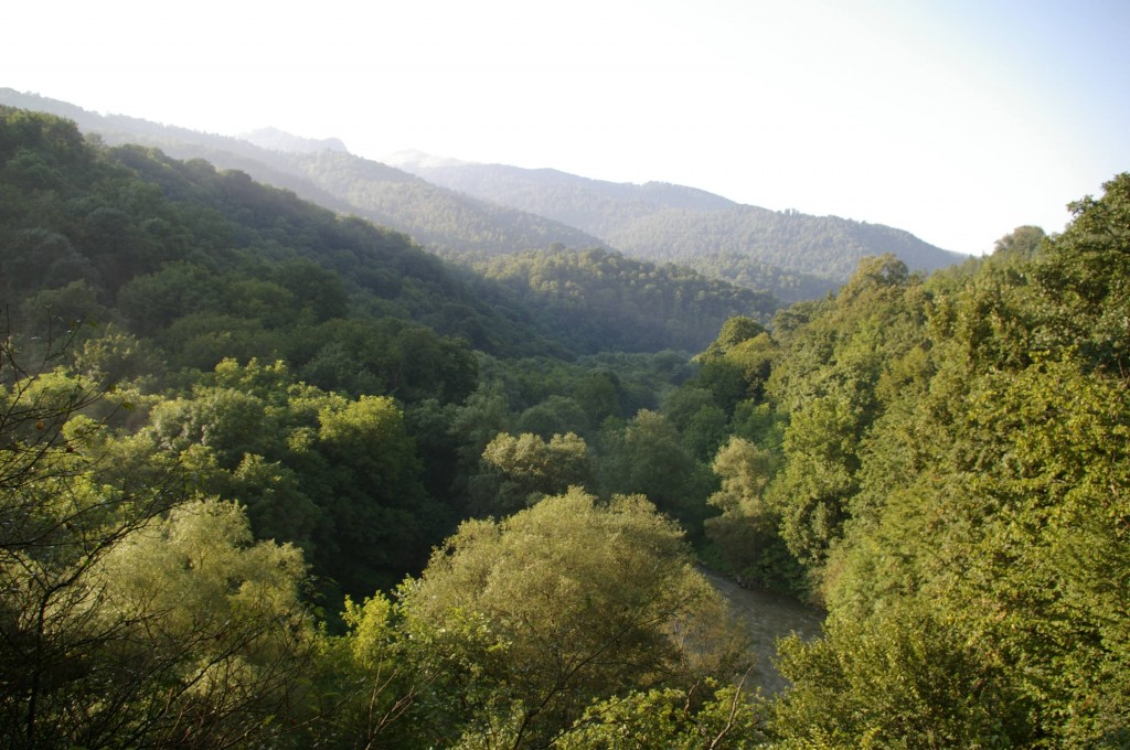 A dense forest in upper Lori (Photo Christian Garbis)